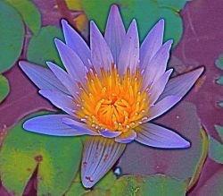 Bodhichitta – Geist der Erleuchtung